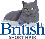 Britishshorthair.fr